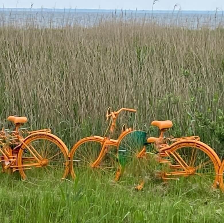 food tour by bike hel penninsula